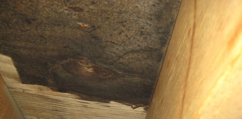 example of mold removal
