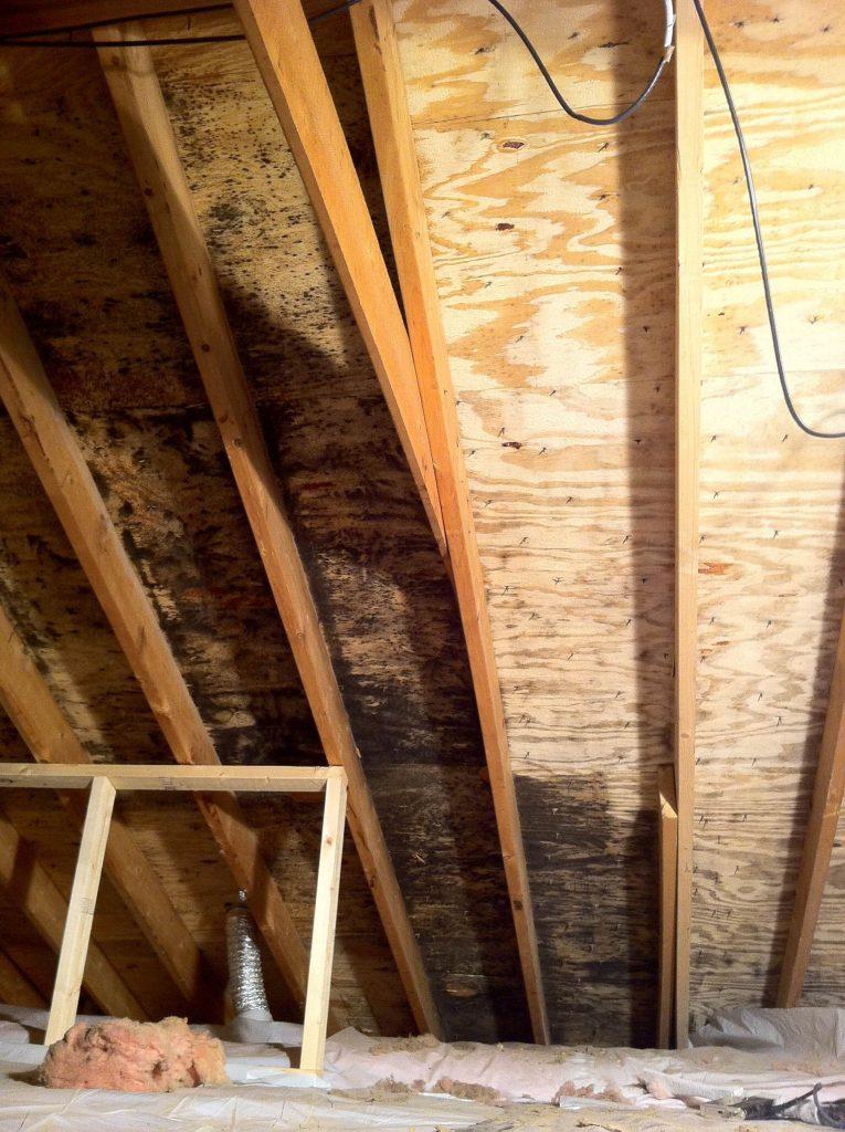 Attic Mold Remediation 183 Attic Mold Removal Alpine