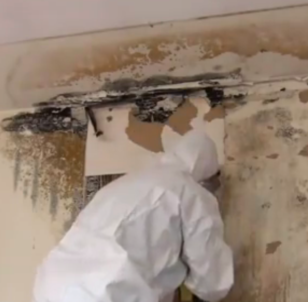 mold remediation versus removal